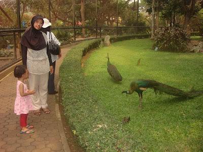 Istri dan Anak Saya di Kebun Binatang Untuk Belajar Mengenal Berbagai Macam Hewan Unggas