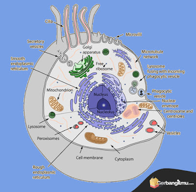 Gambar sel Eukariotik