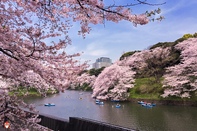 5. ทัวร์โตเกียว ชมซากุระที่สวนจิโดริงาฟูจิ