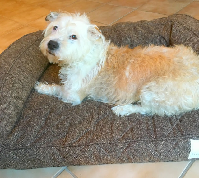Comfy Pet Bed for Dogs