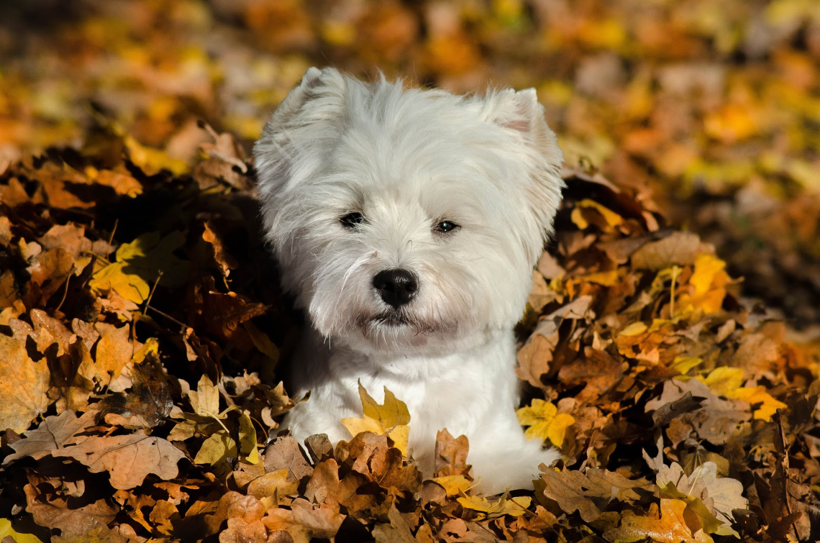 Fond d 39 cran automne animaux fonds d 39 cran hd - Photo d automne gratuite ...