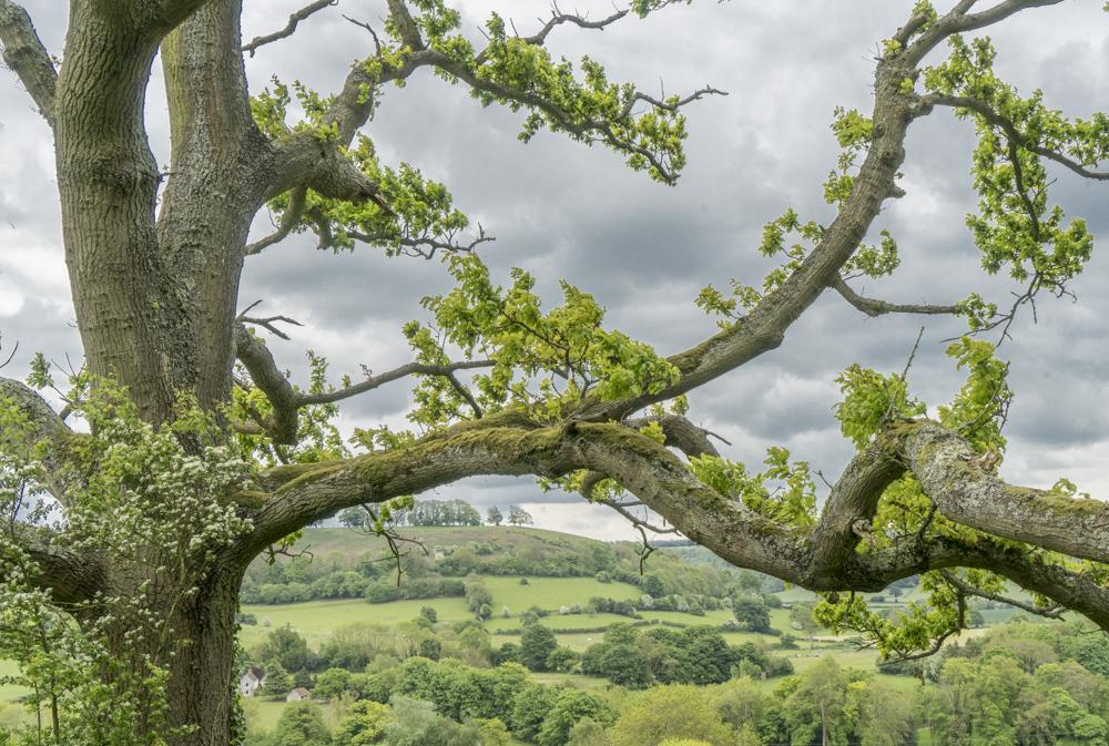 National Trust Properties Near Moreton In Marsh