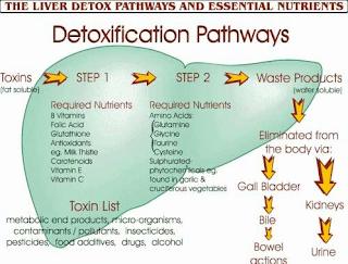 liver detoxification stella adetunji
