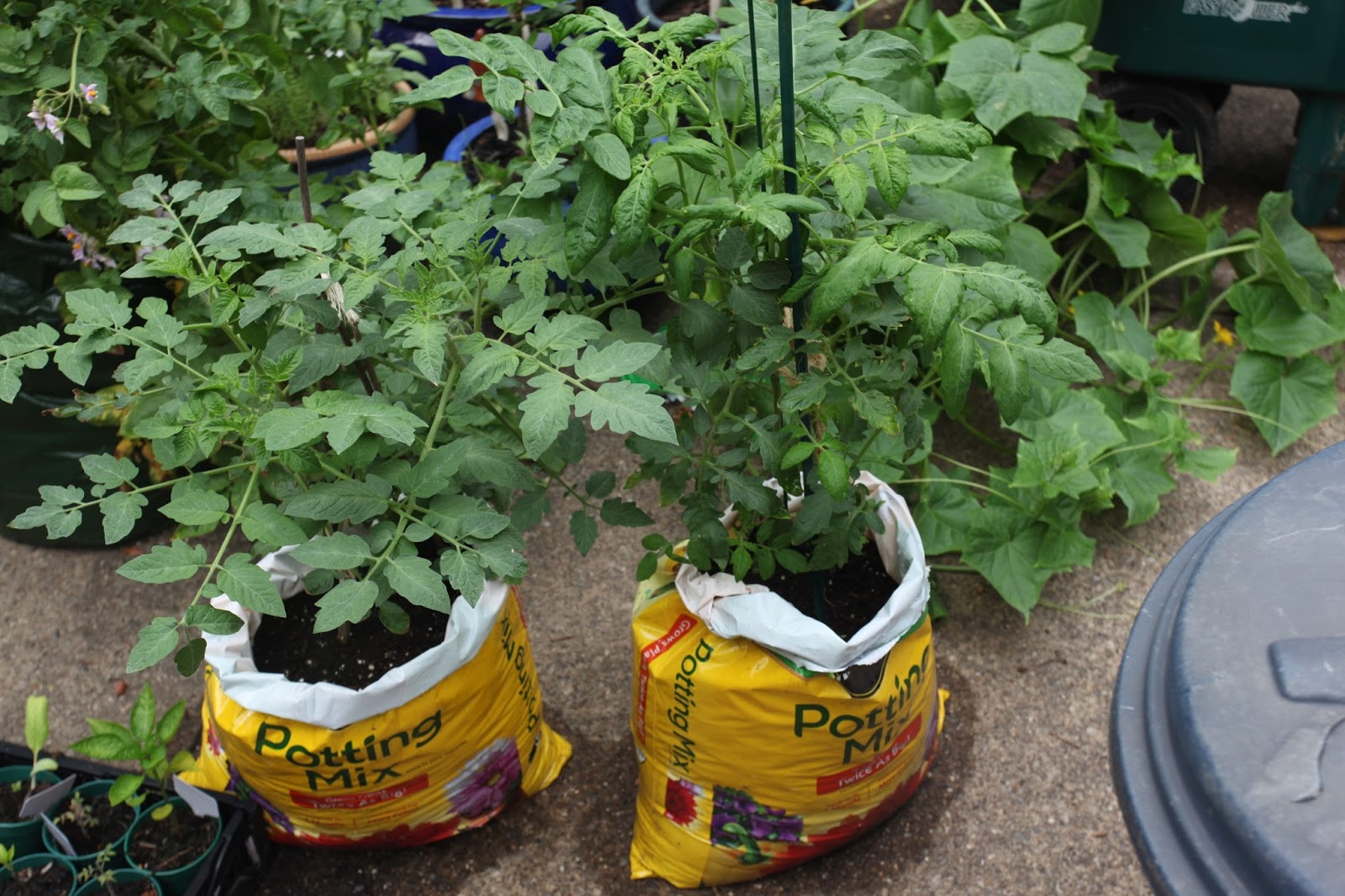 potting soil bag gardening