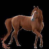 Spirit Totem horse