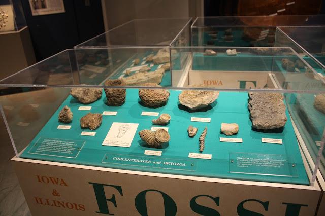 Fossils at Putnam Museum