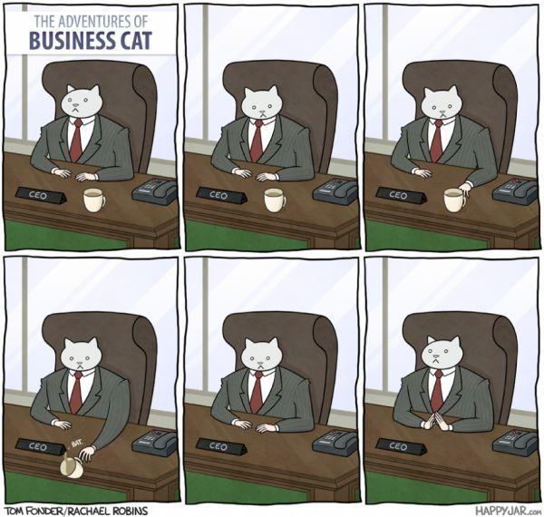 O gato CEO