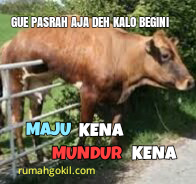 Download 810 Wallpaper Gambar Lucu Gokil Terupdate