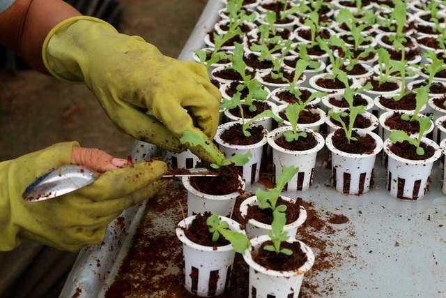 Bỏ phố về quê, đôi bạn trẻ trồng rau thủy canh mang lại hiệu quả cao - Ảnh 4