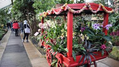 India, un paraíso de orquídeas. Festival de orquídeas 2017 en Kew Gardens