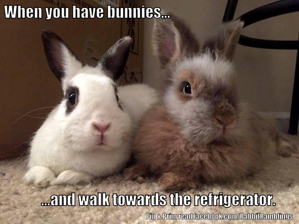 Rabbit Ramblings Funny Bunny Monday Meme Day