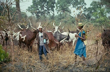 Agatu Massacre: FG Deploys Troops to Benue, Set to Ban Cattle From Villages, Cities
