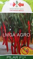 benih cabai pilar, pilar f1, cabai panah merah, cabai pilar, tahan virus