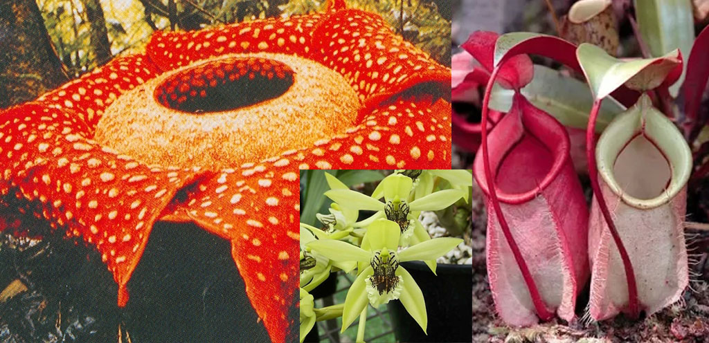 keanekaragaman flora di indonesia