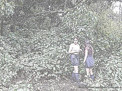 Zarzamoras en la loma de Cerro Viejo