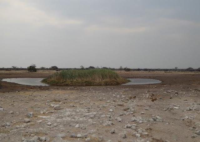 koinachas waterhole vicino namutoni