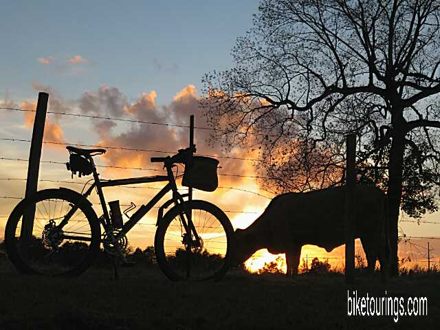 Picture of mountain bike and cattle pasture at sunset