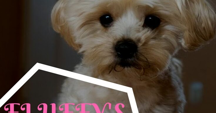 Life and Dog Stuff Blog Posts - Buffy and Fluffy - Magazine cover