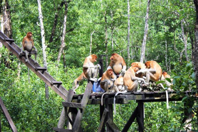 Makalah Kawasan Ekologi Laut Tropis Di Kota Tarakan Kalimantan