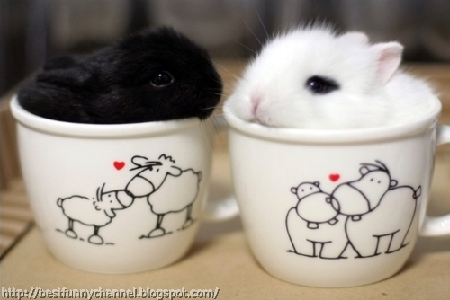 Two funny bunny in a cups.