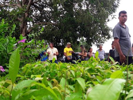 Agricultores das áreas de Reservas em Guajará-Mirim recebem mudas de castanha do Brasil