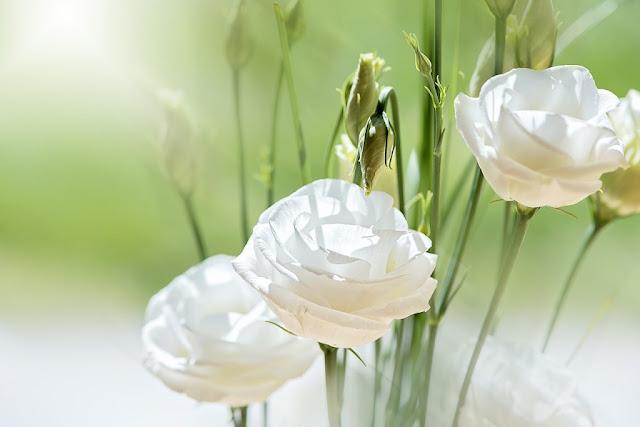 hoa cat tuong dep nhat