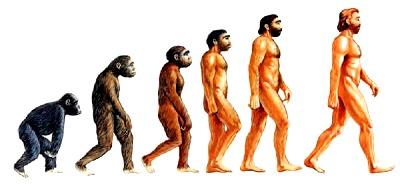 Imagen de la Evolución del Hombre