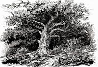 ozols, oak, latvian folklore, latvian mythology, latviešu folklora, latviešu mitoloģija, capital r, 2018, drawing