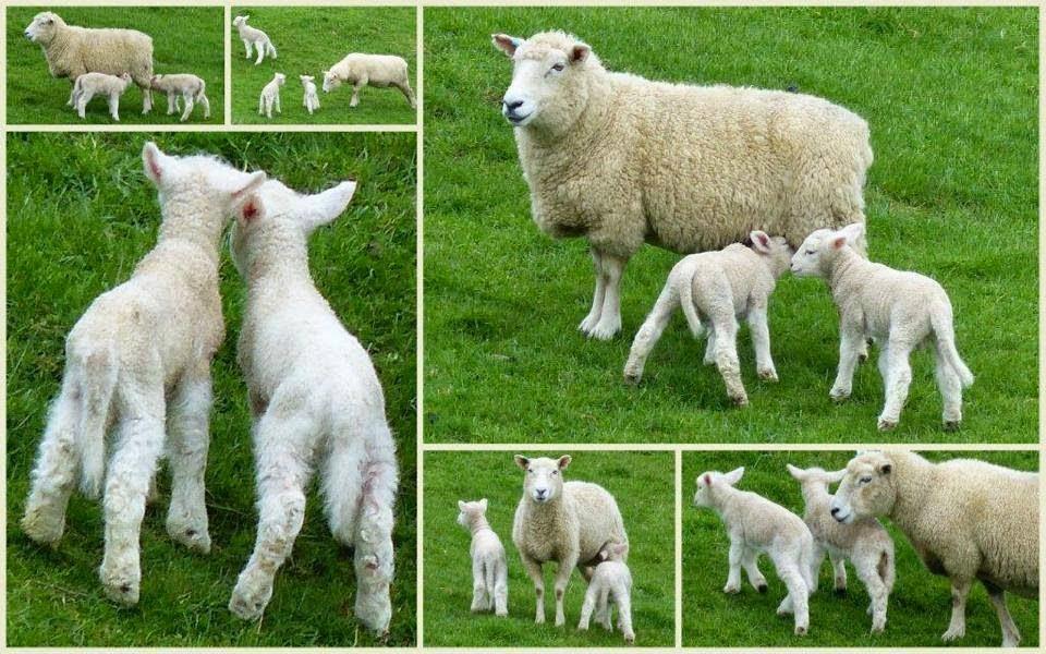 Nicholson Farm Herefordshire