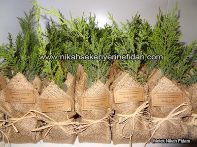 Muğla Bodrum'da Nikah Çamı hediyesi nereden alınır 2