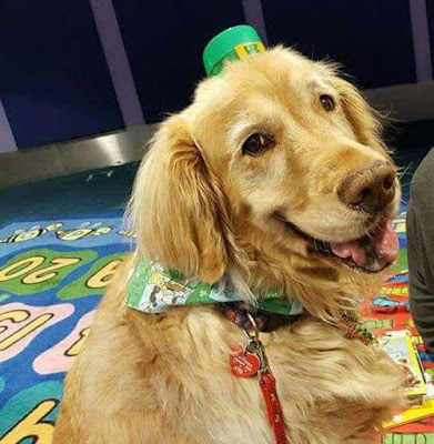 Therapy dogs help children improve their reading skills
