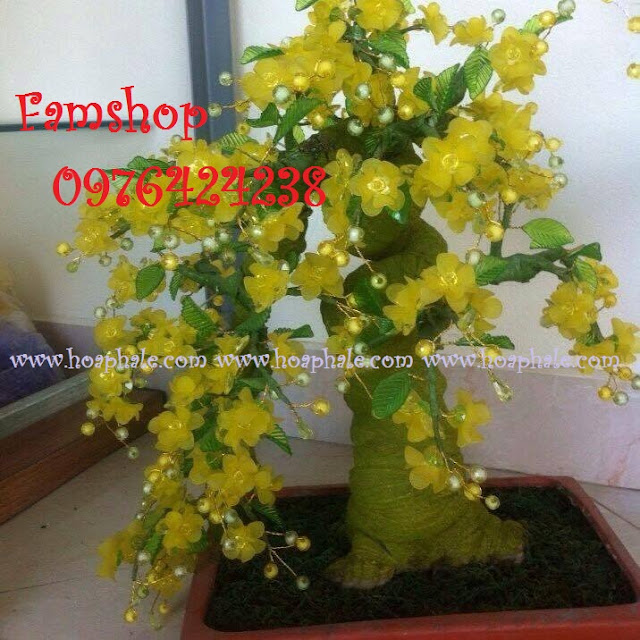 Goc bonsai cay hoa mai tai Mac Thai To