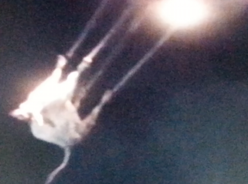 YIKES!!! ~ Cow Being Abducted By UFO Over Montana UFO%252C%2BUFOs%252C%2Bsighting%252C%2Bsightings%252C%2Balien%252C%2BET%252C%2B%2BNLO%252C%2Bvi%25C4%2591enje%252C%2Bvi%25C4%2591enja%252C%2Bstranac%252C%2B%25E4%25B8%258D%25E6%2598%258E%25E9%25A3%259B%25E8%25A1%258C%25E7%2589%25A9%252C%2B%25E7%259E%2584%25E6%25BA%2596%252C%2B%25E7%259E%2584%25E6%25BA%2596%252C%2B%25E5%25A4%2596%25E6%2598%259F%25E4%25BA%25BA%252C%2B%2Bovnis%252C%2Bobservation%252C%2Bobservations%252CY%25CC%2581mislegt%252C%2Bframandi%252C%2B%25E7%259B%25AE%25E6%2592%2583%25E3%2580%2581%25E7%259B%25AE%25E6%2592%2583%25E3%2580%2581%25E3%2582%25A8%25E3%2582%25A4%25E3%2583%25AA%25E3%2582%25A2%25E3%2583%25B3%25E3%2580%2581%252C%2B%25E1%2584%2580%25E1%2585%25AA%25E1%2586%25AB%25E1%2584%258E%25E1%2585%25A1%25E1%2586%25AF%252C%2B%25E1%2584%2580%25E1%2585%25AA%25E1%2586%25AB%25E1%2584%258E%25E1%2585%25A1%25E1%2586%25AF%252C%2B%25E1%2584%258B%25E1%2585%25AC%25E1%2584%2580%25E1%2585%25A8%25E1%2584%258B%25E1%2585%25B5%25E1%2586%25AB%252C%2B%25D0%259D%25D0%259B%25D0%259E%252C%2B%25D0%259D%25D0%259B%25D0%259E%252C%2B%25D0%25B2%25D0%25B8%25D0%25B4%25D1%2583%25D0%25B2%25D0%25B0%25D1%259A%25D0%25B5%252C%2B%25D0%25B2%25D0%25B8%25D0%25B4%25D1%2583%25D0%25B2%25D0%25B0%25D1%259A%25D0%25B0%252C%2Bcow%252C%2Bcows%252C%2Bcattle%252C%2B