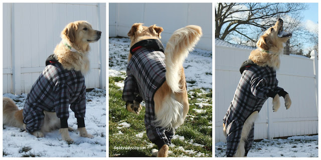 dog playing in the snow wearing a snojam fleece dog coat