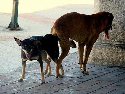 Cogiendo por las calles de la ciudad de mexico cdmx sorexxx - 5 3
