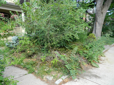 Toronto Leslieville front garden summer cleanup before Paul Jung Gardening Services