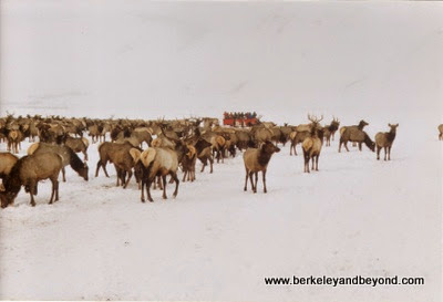 National Elk Refuge in Jackson Hole, Wyoming