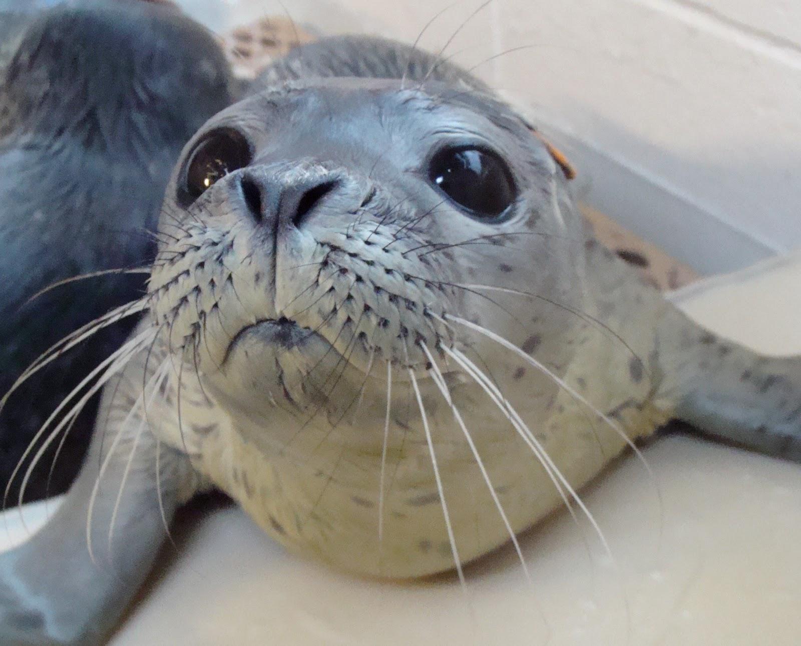 Life Of True Seal Life Of Sea