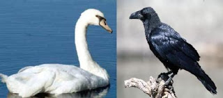 fabula corta el cuervo y el cisne