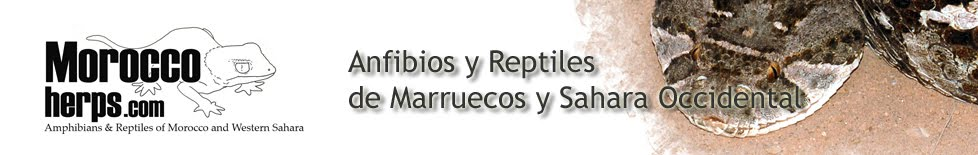 Anfibios y Reptiles de Marruecos y Sahara Occidental