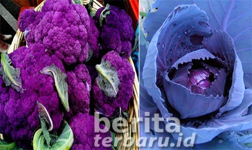 manfaat sayuran berwarna ungu