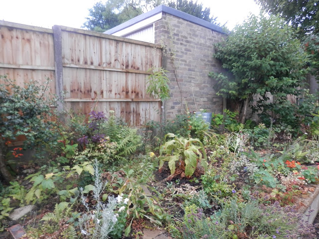 Dairy of a permaculture (ish) garden, July 2018. From UK garden blogger secondhandsusie.blogspot.com #gardenblogger #ukpermaculturegarden #suburbanpermaculture #growyourownfood #foodnotlawns