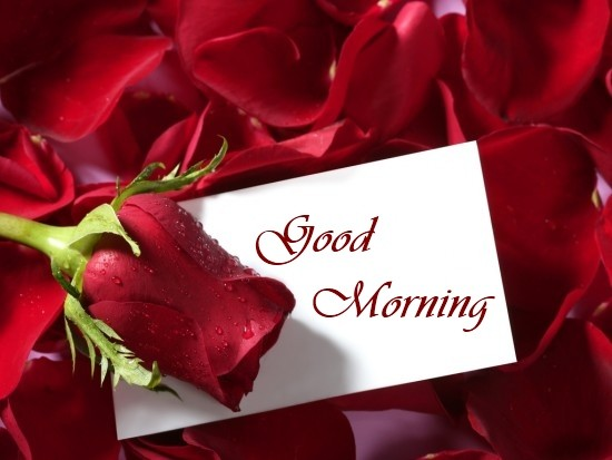 Good Morning Roses Images HD
