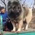 Ένας ΤΕΡΑΣΤΙΟΣ σκύλος...