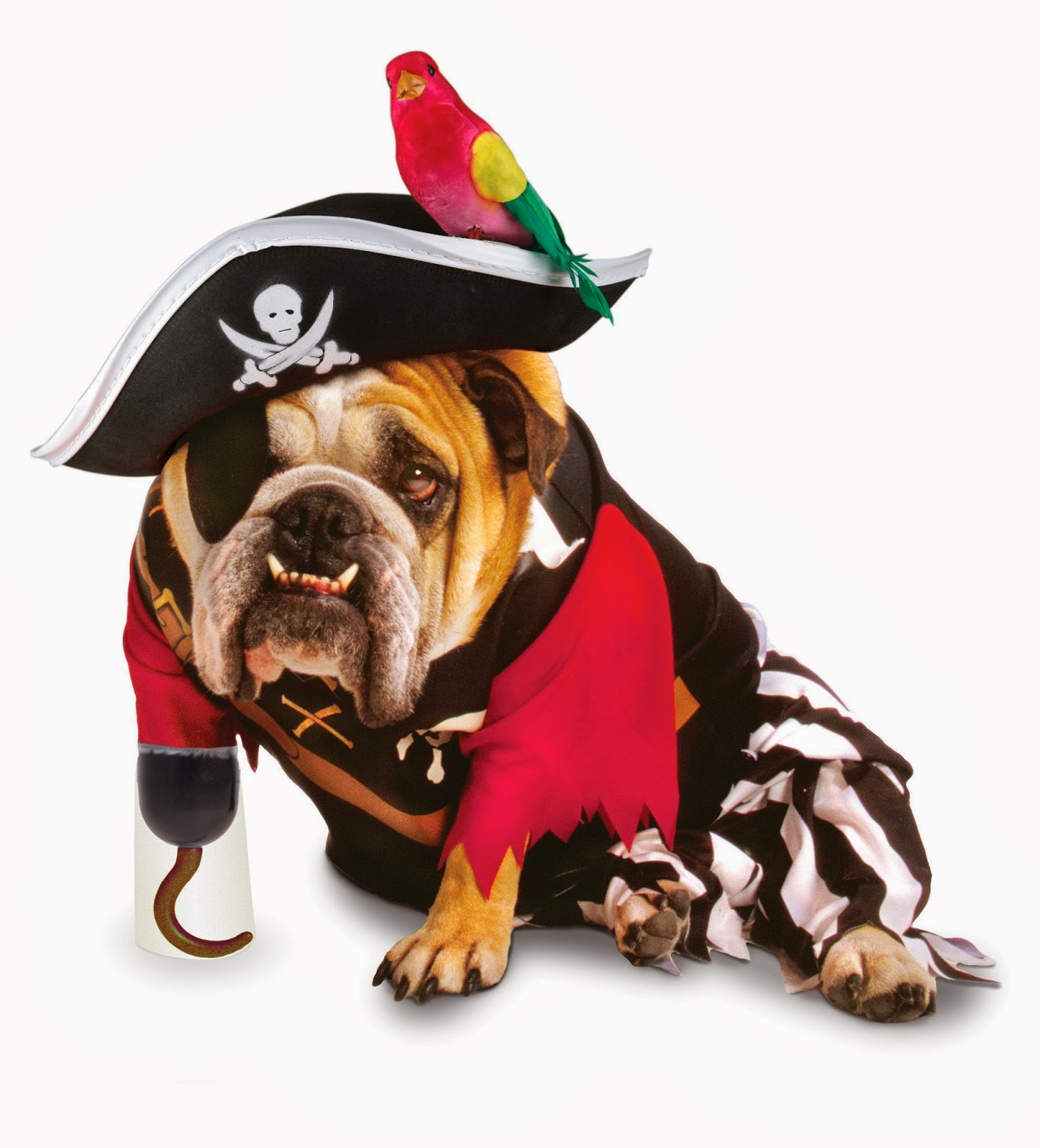 Image of bulldog dressed up in a pirate costume