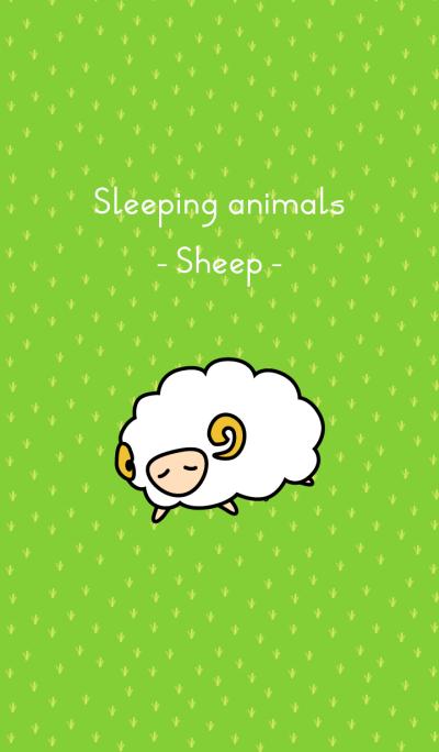 Sleeping animals <Sheep>