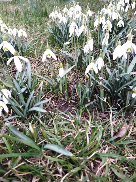wiosna Słupsk