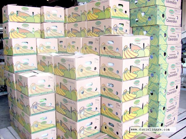 pisang cavendish sunpride sudah dikemas dan siap didistribusikan ke dalam dan luar negeri