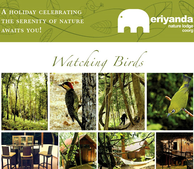Birdwatching at Meriyanda Nature Lodge Coorg, Western ghats birding