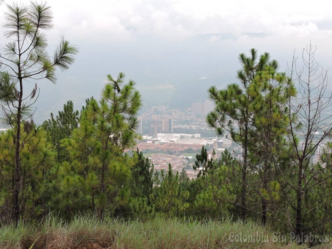 agradable vista desde el cerro quitasol en medio de los pinos